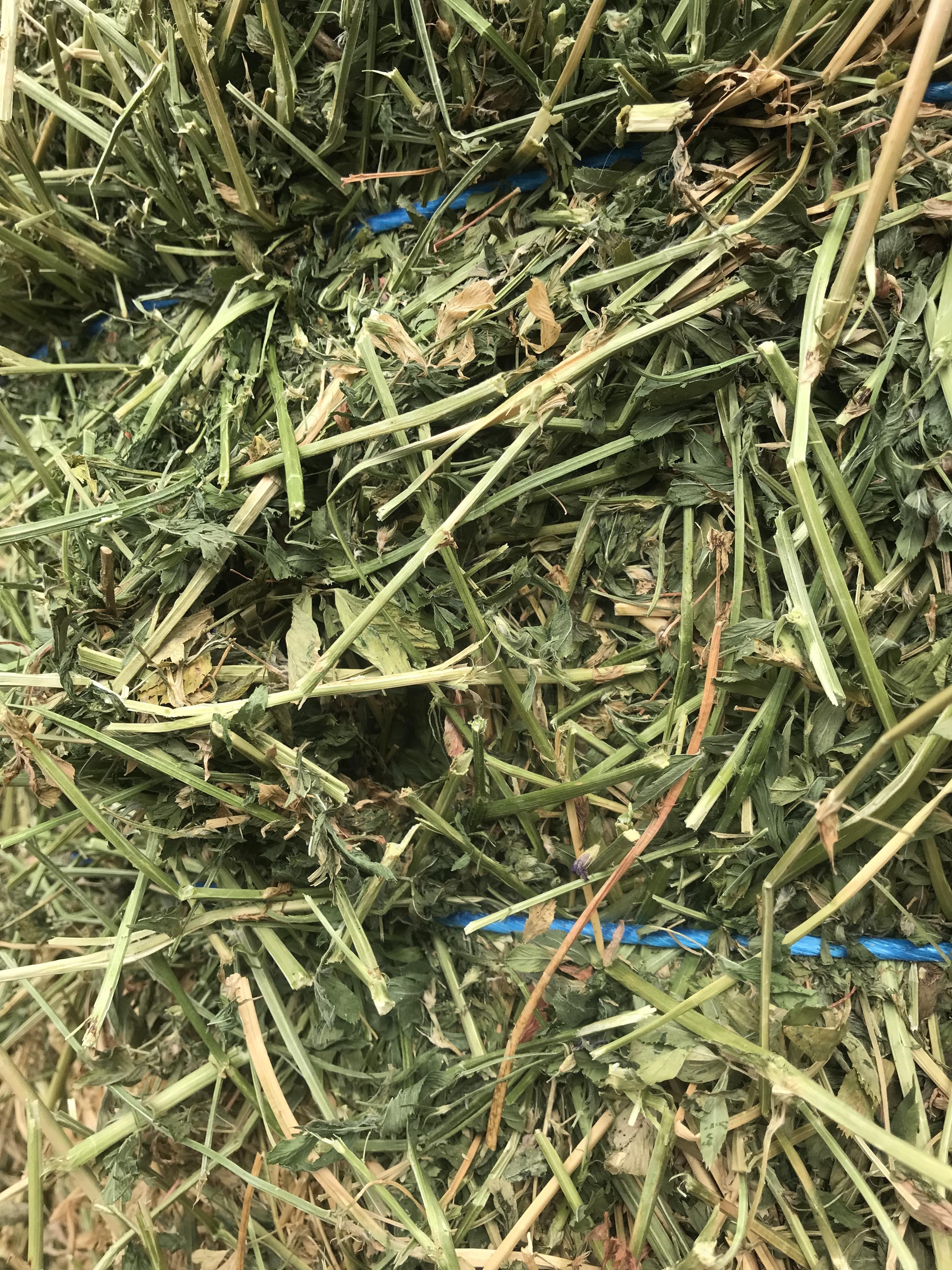 2nd Cut Alfalfa Premium WA