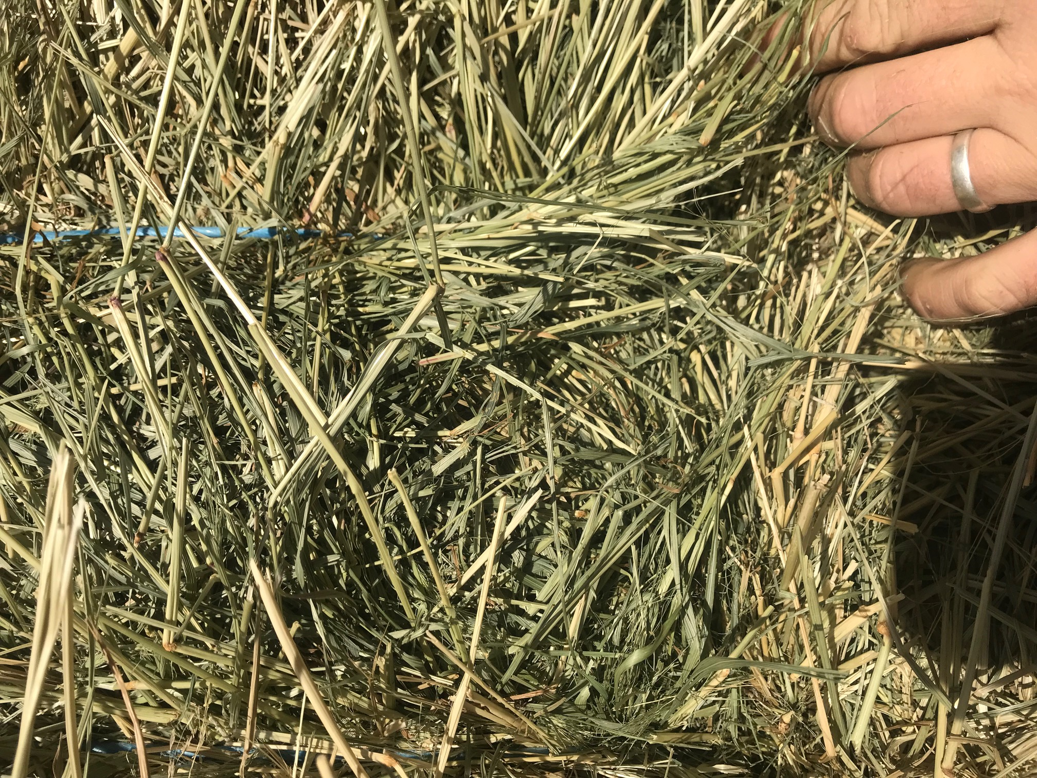 4x4 Big Bale Low Sugar Hay