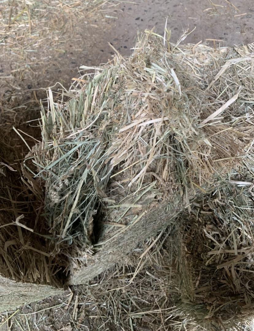 Low Sugar Teff Hay